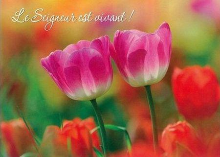 Carte simple : Tulipes