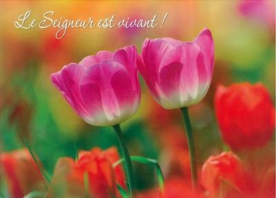 Carte Avec Verset Tulipes roses