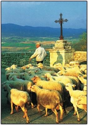 Carte Sans Texte Berger et ses moutons
