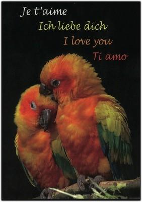 Carte avec message Perroquets ( je t'aime....)
