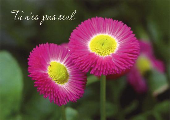 Carte avec message Fleurs rose (Tu n'es pas seul)