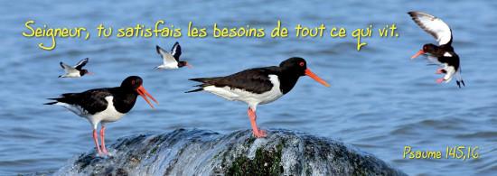 Signet Oiseaux