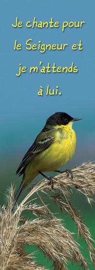 Signet Oiseau