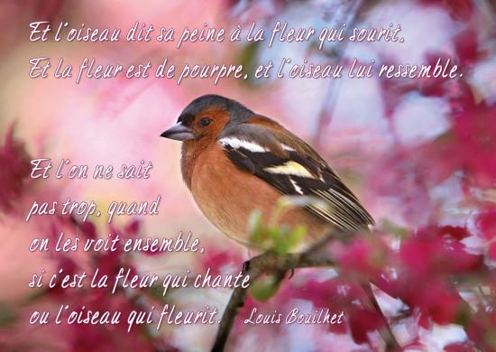 Carte Citation Oiseau sur branche, fond rose