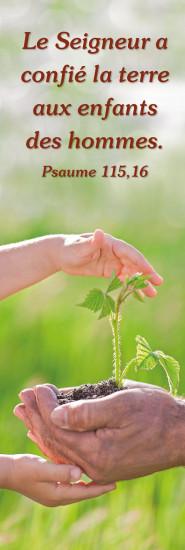 Signet Arbuste dans mains