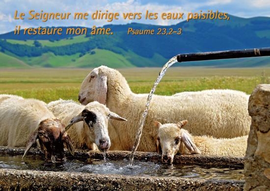 Carte Avec Verset Moutons s'abrevant à la fontaine