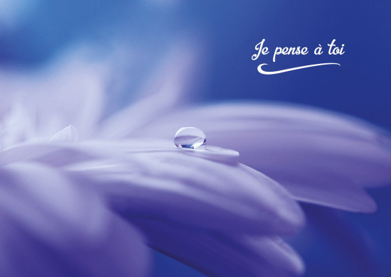 Carte avec message Goutte d'eau sur une fleur blanche