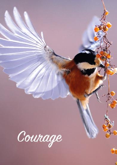 Minicarte Oiseau ailes déployées