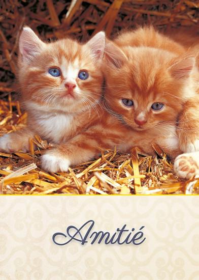 Minicarte Deux chatons dans la paille