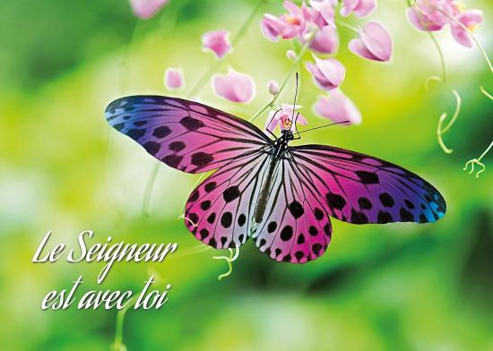 Minicarte Papillon rose et violet posé sur un fleur