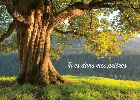 Minicarte Vieil arbre