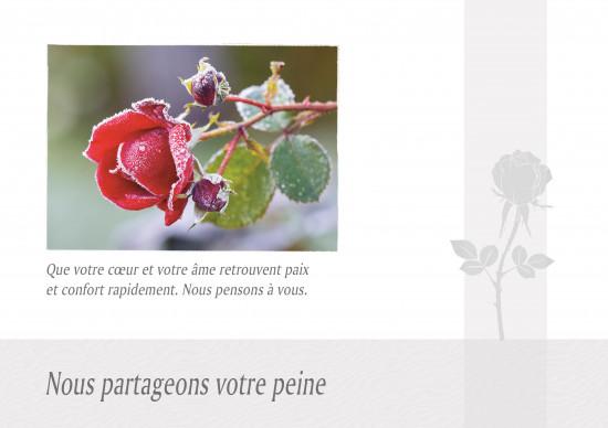 Carte double Condoléances Rose couverte de givre