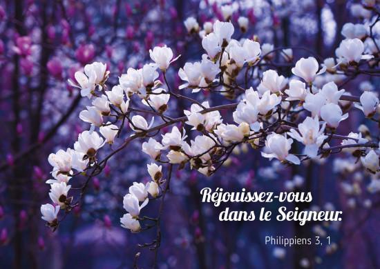 Carte Avec Verset Fleurs d'arbre blanches