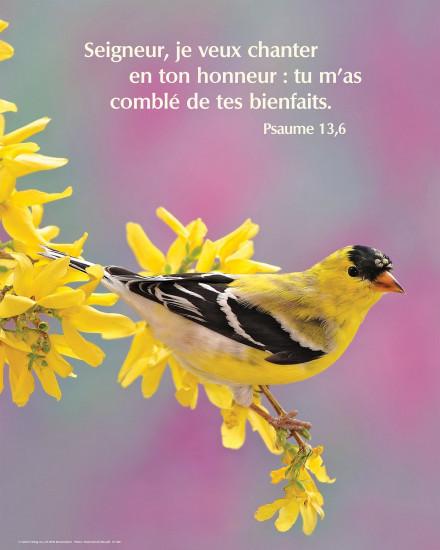 Poster Oiseau et fleurs d'arbre jaunes