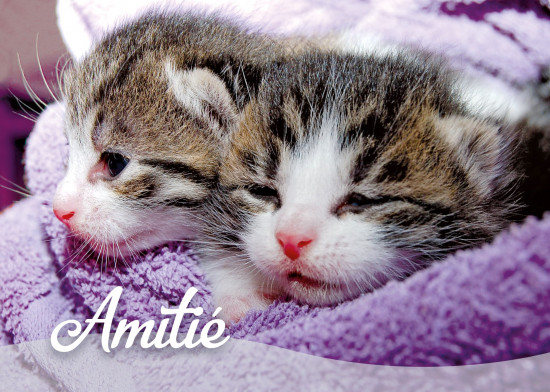 Mini Carte Deux chatons dans une couverture (Amitié)