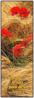 Signet Coquelicots dans champ de blé