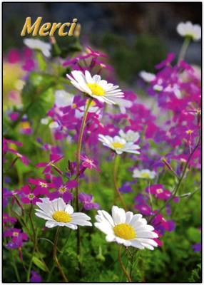 Mini Carte Champ de fleurs (Merci)