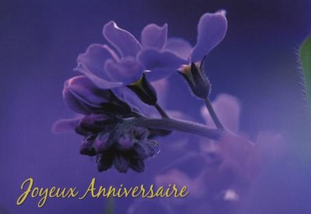 Carte double Anniversaire.  Fleurs mauves