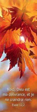 Signet Feuilles de platane à l'automne