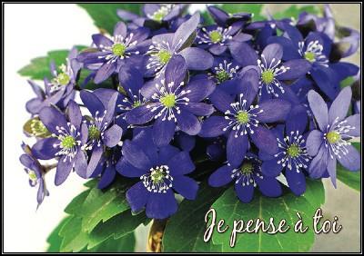 Carte avec message Bouquet de fleurs bleues (Je pense à toi)