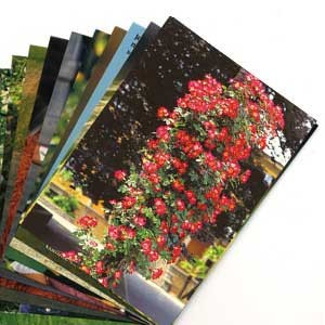 LOT FIN SERIE :10 cartes postales diverses sans texte